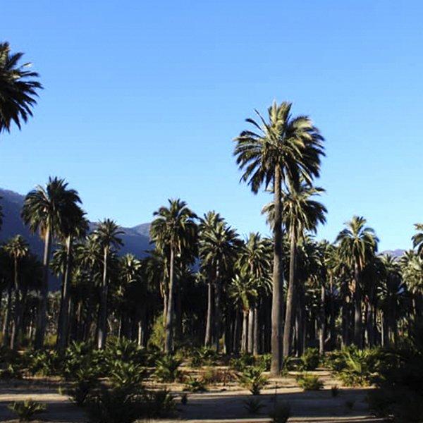 Fotografía de Parque Nacional Palmas de Cocalán
